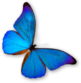 http://allindiajangam.com/images/general-images/butterfly.png